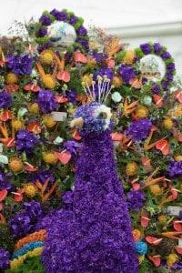 Chelsea Flower show Peacocks